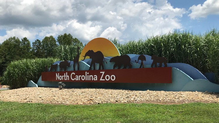 'We are truly devastated by the loss.' NC Zoo Arborist dies after falling from tree during a rescue drill