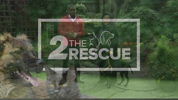 2 the Rescue: meet Carter