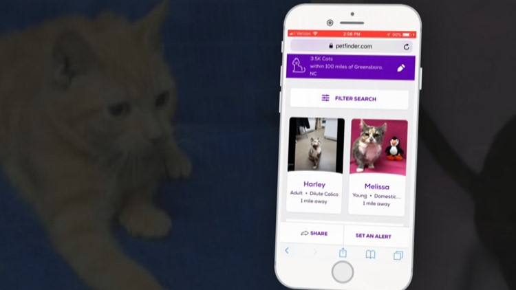 Here's Why You Won't Find Guilford County Animal Shelter Photos On Petfinder