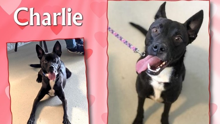 2 the Rescue: Meet Charlie