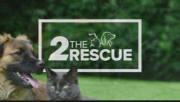 2 The Rescue: Leo