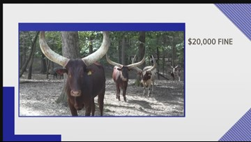 Lazy 5 Ranch In Mooresville Will Pay $20,000 Fine For Charges of Mistreating Animals