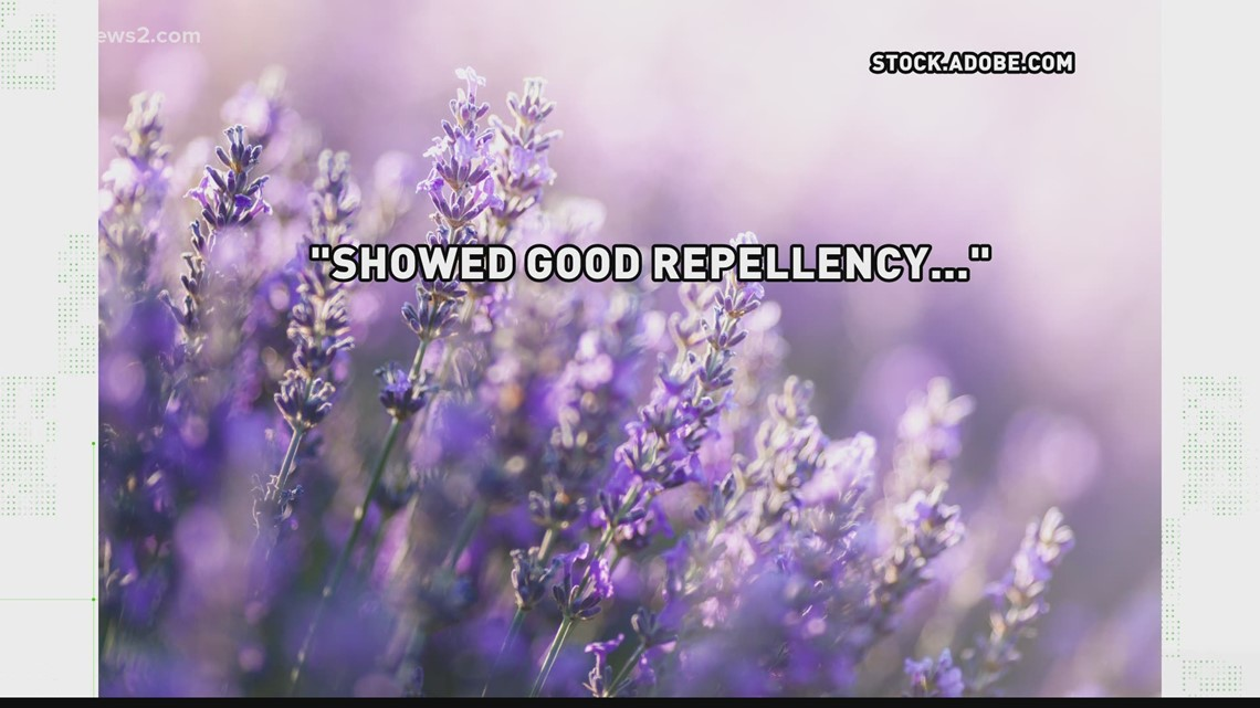 VERIFY: Lavender is an effective, natural mosquito repellent