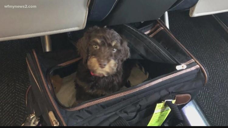 Pet-adoption surge creates demand for 'puppy nannies'