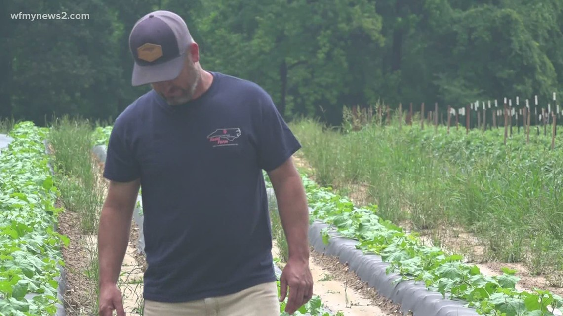Triad farmers dealing with drought conditions
