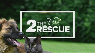 2 The Rescue: Meet Tiger