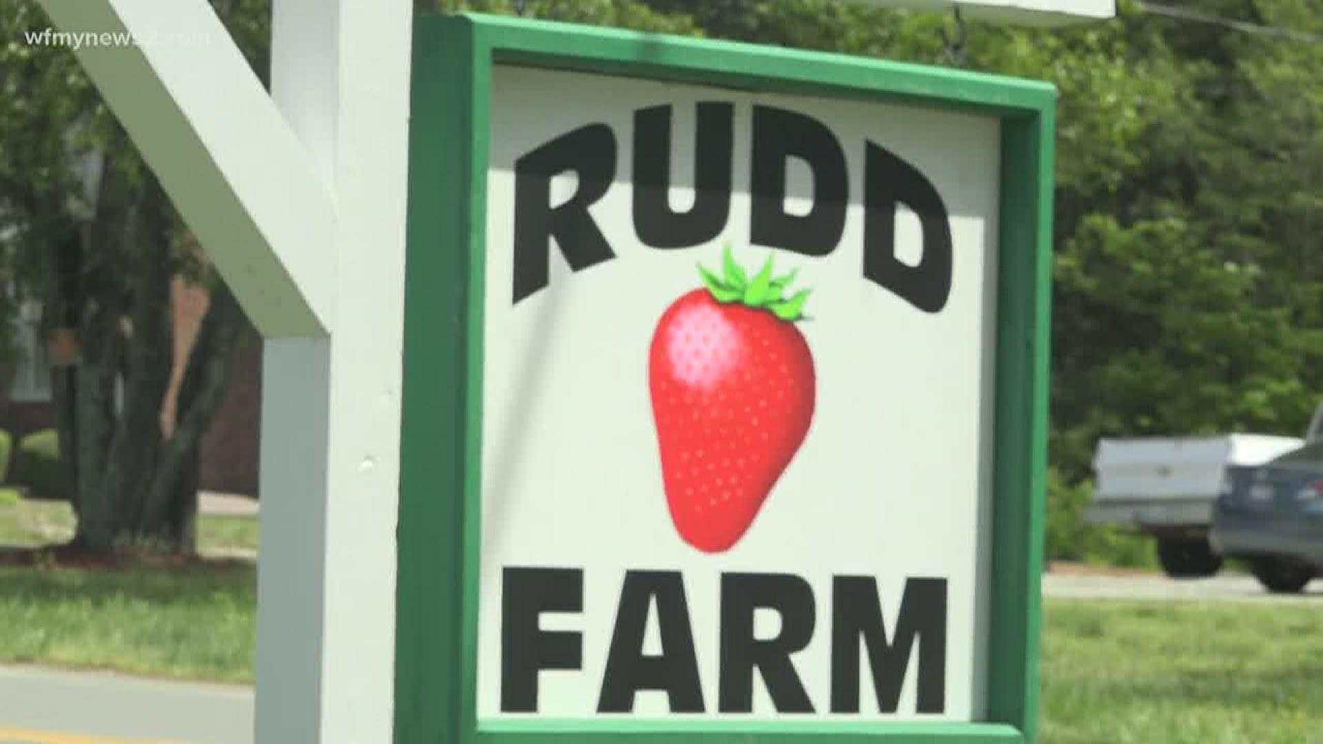 Rudd Farm In Greensboro Reopens For Drive Thru Strawberries Wfmynews2 Com