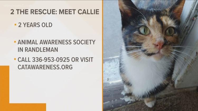 2 the Rescue: Meet Callie