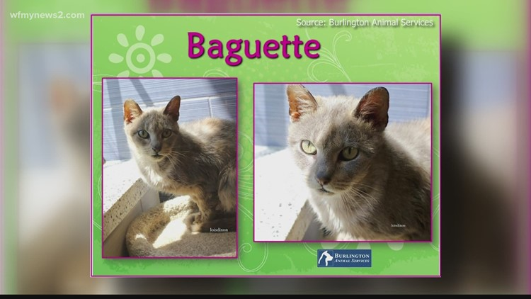 2 the Rescue: Meet Baguette!