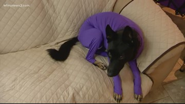2 Test: A Suit For Your Dog!?!?