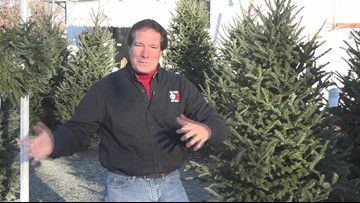 Picking Out The Perfect Christmas Tree