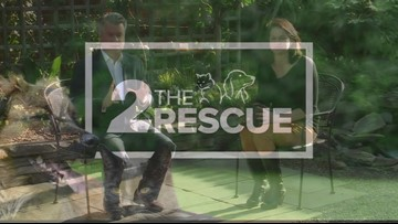 2 The Rescue: Meet Georgia