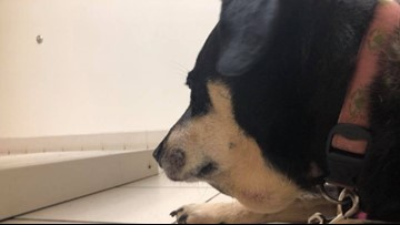NC Family Warns Others After Dog Bitten By Copperhead