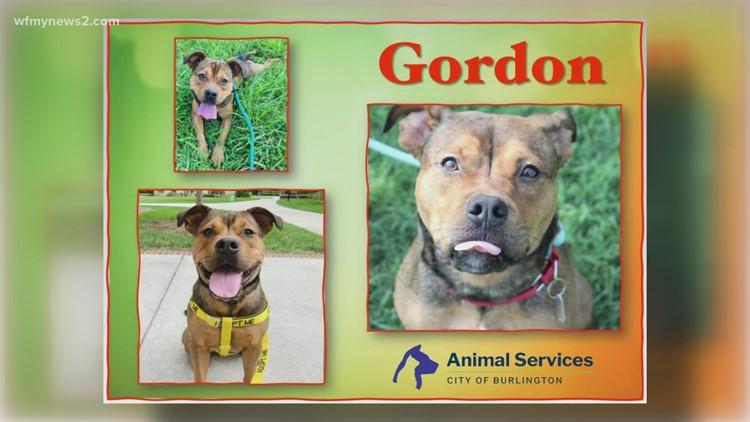 Meet Gordon: 2 the Rescue