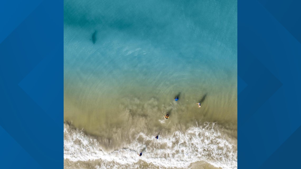 Dad Spots Shark Swimming Near His Children While He Was Taking Drone Photos Wfmynews2 Com