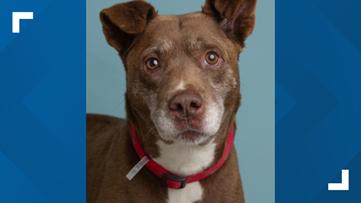 2 the Rescue: Meet Bubba
