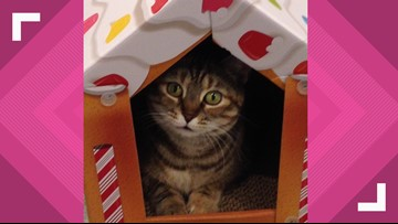 2 The Rescue: Zerra Needs a Forever Home