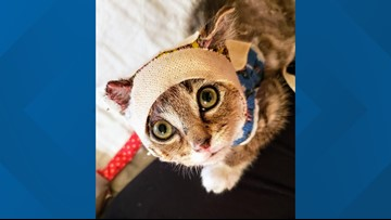 Adorable foster kitten with serious chemical burns get back on its feet with help of Greensboro women
