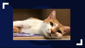 2 The Rescue: Meet Mouse the Kitten