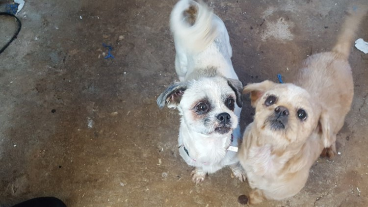 2 the Rescue: Meet Chloe & Rusty