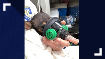 First Responders Rescue Dog During Call in Pleasant Garden and Our Hearts Are Melting