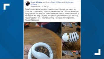 Man says a spiral light bulb packed with ladybugs almost burned down his house