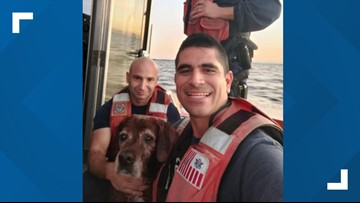 VIDEO: Dog swimming off Florida coast rescued by Coast Guard
