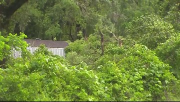 8-year-old girl dies after tree falls on house during storm