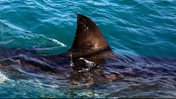 9-Year-Old Girl Bitten by Shark on Florida Beach