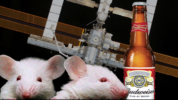 SpaceX sending 'mighty mice' and beer ingredients to the International Space Station