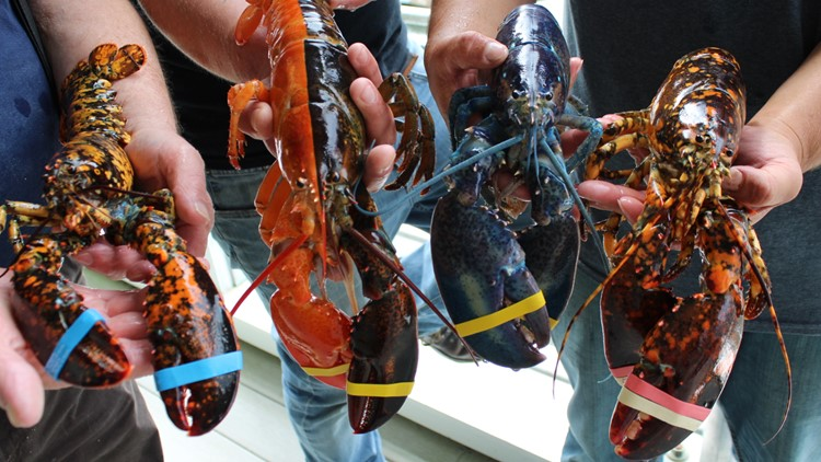 unique lobsters2 9 9 19