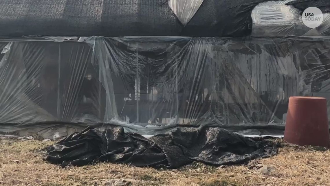 Inside a dog meat farm near the Winter Olympics