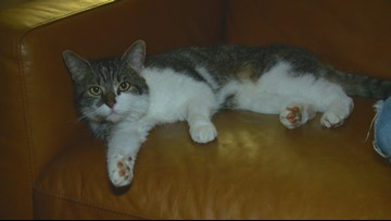 A Christmas miracle: Milo, the missing cat, has been found safe