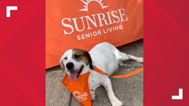 "Journey the ""house dog"" at Sunrise Senior Living in Silver Spring"