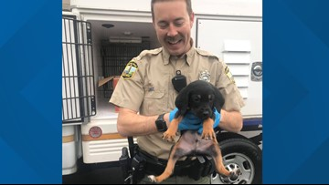 Stolen, sick puppy 'Bam Bam' returned to Virginia Beach animal shelter
