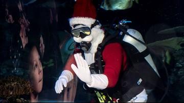 Santa goes scuba diving at the Virginia Aquarium