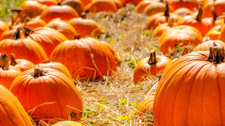 Pick your own pumpkin! Here's a list of farms in the Triad