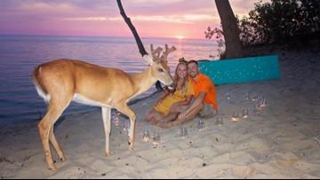 Saugatuck deer photobombs engagement photos on the beach